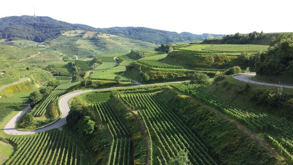 Uitzicht over de vele wijnvelden die de groene Vogezen in Frankrijk rijk is