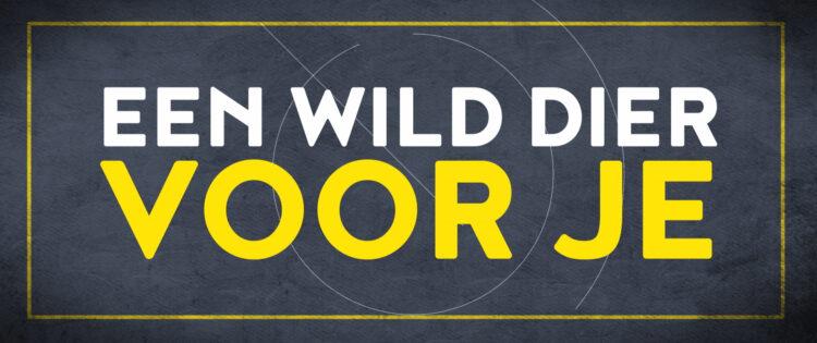 Wild Dier